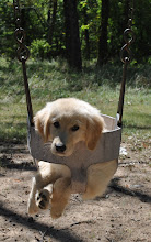 Time to swing :)