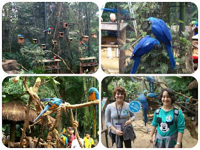 Araras do Parque das Aves, em Foz do Iguaçu