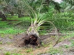 Faktor Penyebab Penyakit Pada Tumbuhan