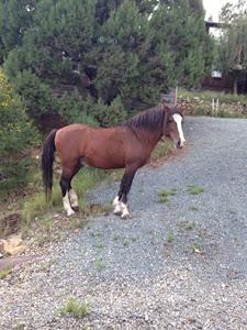 The Stallion waiting for his herd Sept 2016