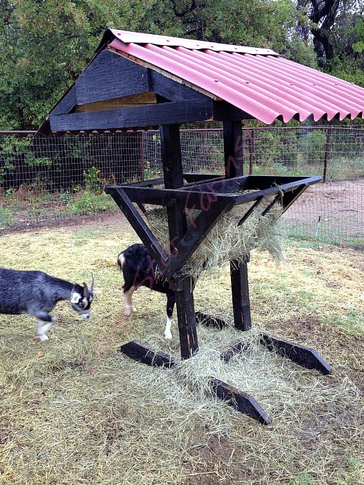 How to Keep Goats Healthy & Entertained, shared by Lonestar Homestead