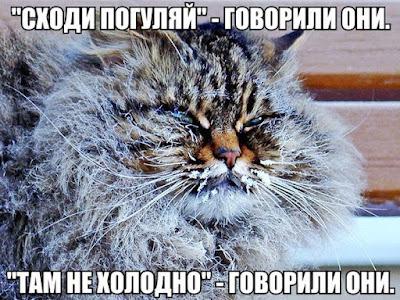 Зима и кошки. Кошка покрыта инеем. Кошка в мороз.