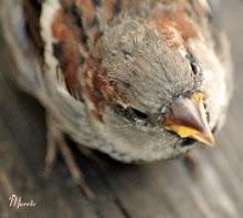 -Lille fugl-