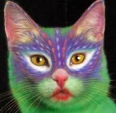 Dandan Kucing Lucu
