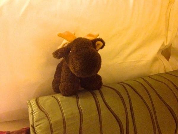 Libera Moose