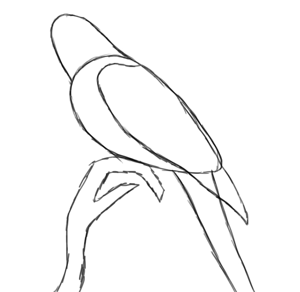 Parrot drawing outline - photo#17