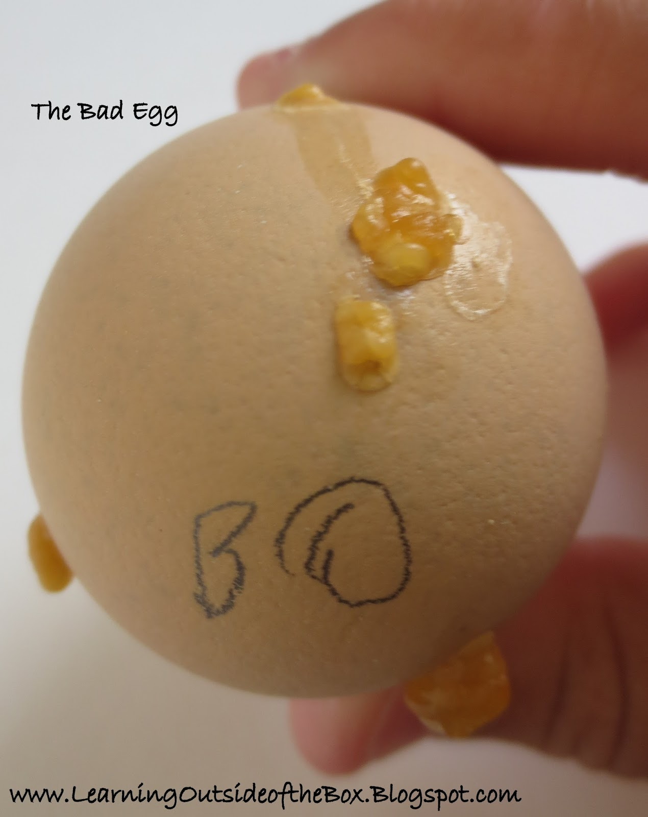 Day St And Thats Why The Picture Below Happened It Could Have Exploded And Contaminated All Of The Other Eggs If We Didnt Get It In Time