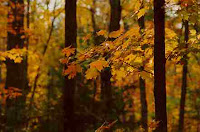 autumn leaves in a forest