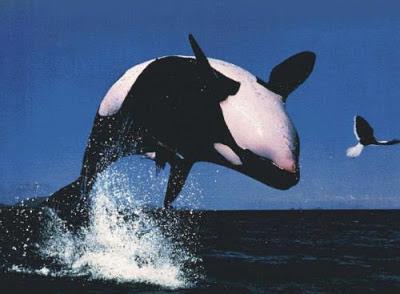 Foto baleia