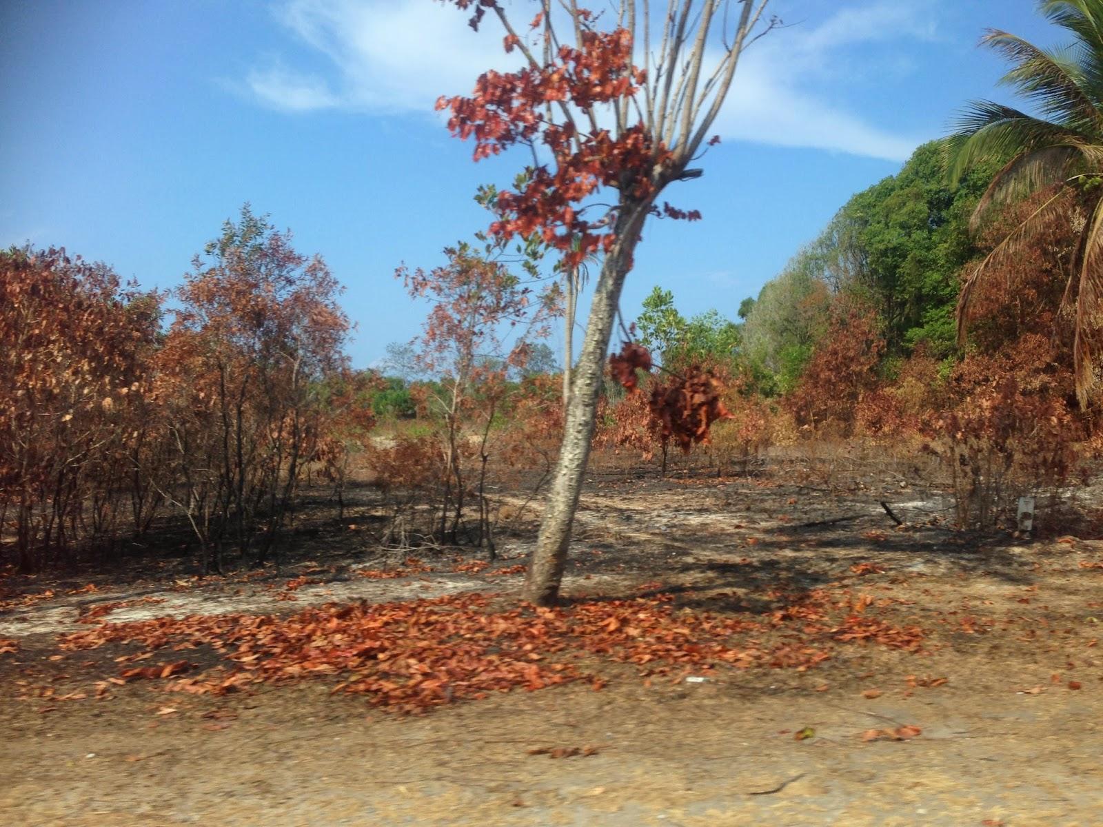 Burned foliage :(