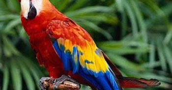 Q Significa Parrot Tarot GRATIS Online: S...