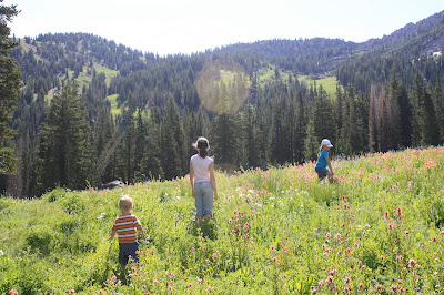 Easy Utah Wildflower Hikes