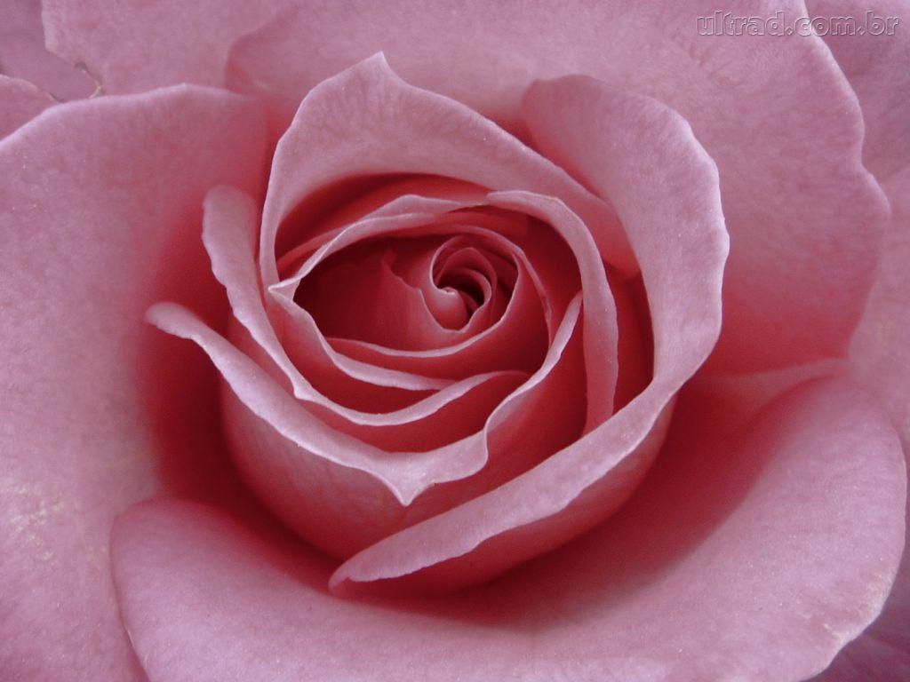 http://1.bp.blogspot.com/-kf60D_mKq3g/UBspXWl1tqI/AAAAAAAAHzA/GUn8Qkew7pg/s1600/Papel-de-Parede-Dia-das-Maes.jpg