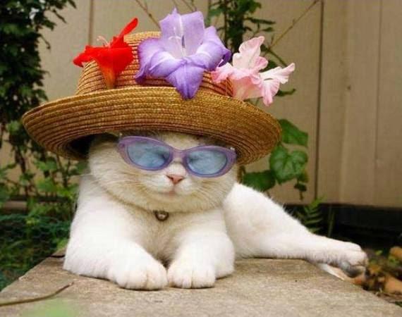 kucing comel senyum
