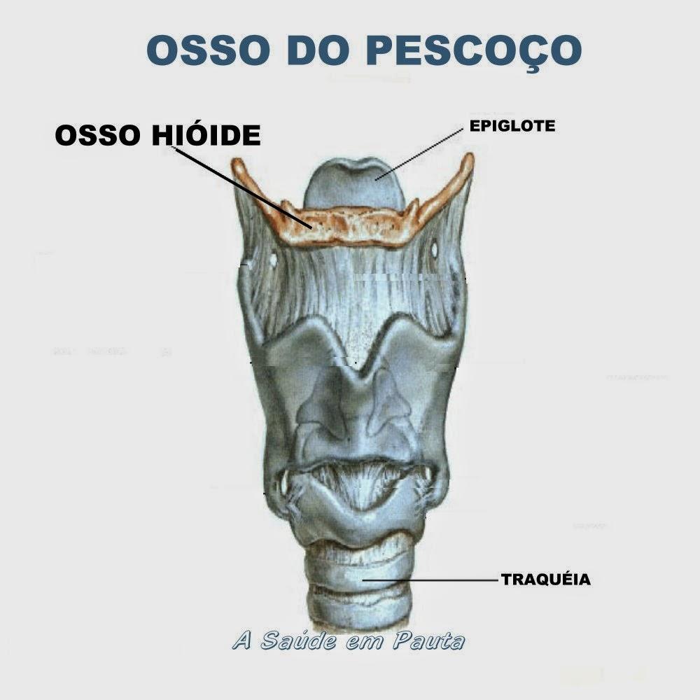 Nome e localização do osso do pescoço