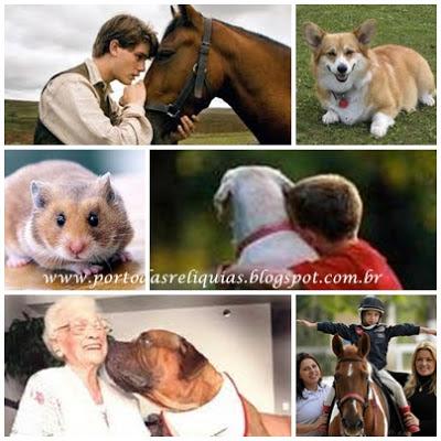 animais-convivências-beneficios