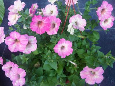 Bunga Gantung