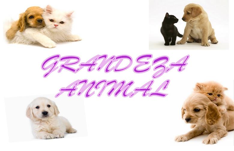 """""""A compaixão pelos animais está intimamente ligada a bondade de caráter..."""""""