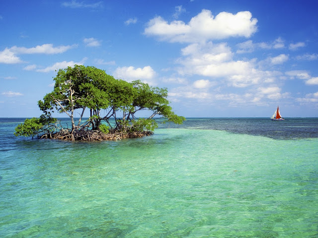 Caye Caulker, Belize --- Mangrove Island and Sailboat