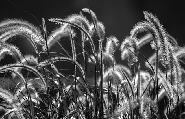 blowing in the wind  2012  matthew g beall photography