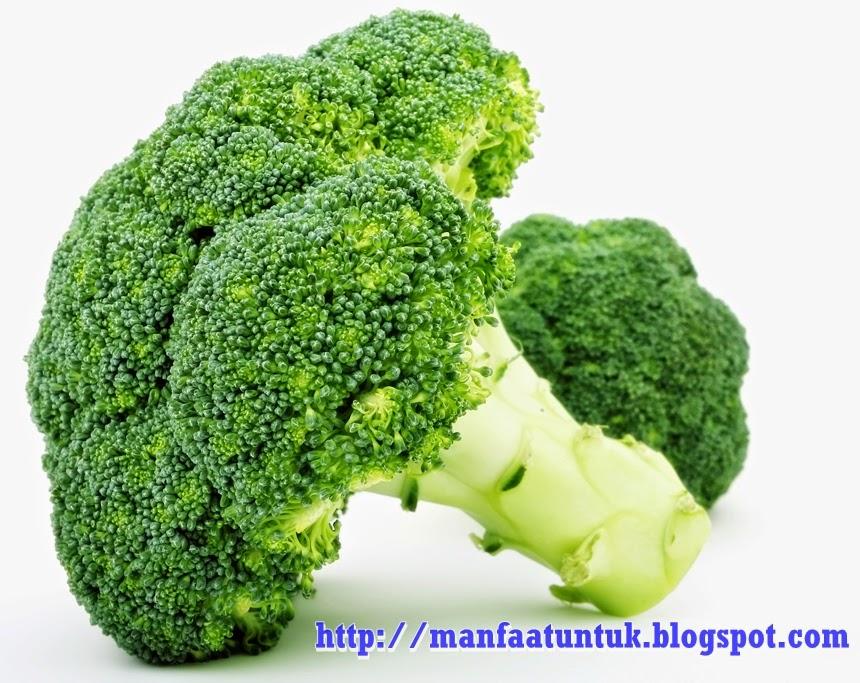 manfaat dan khasiat makan brokoli untuk kesehatan