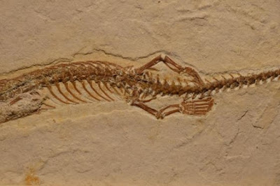 Fosil Misterius Ular Prasejarah Berkaki Empat