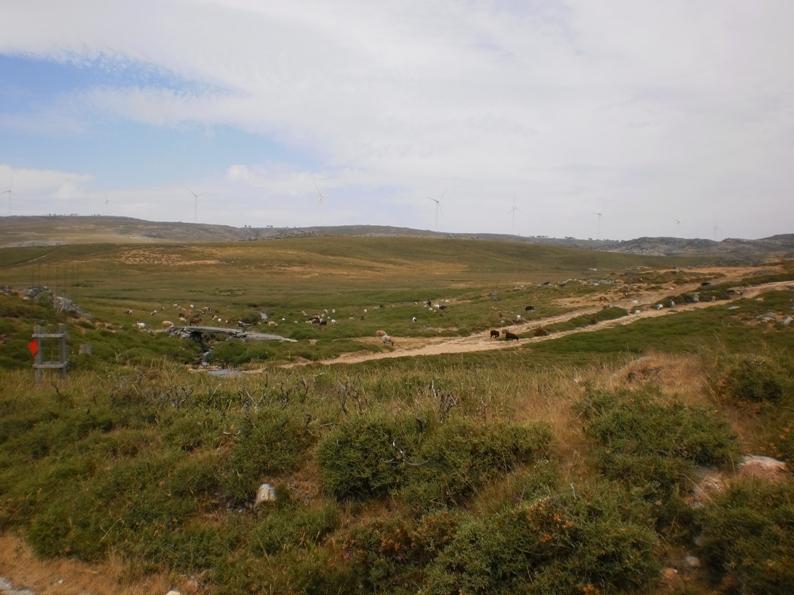 Cabras e Ovelhas na Serra da Freita
