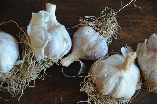 40 Cloves of Garlic