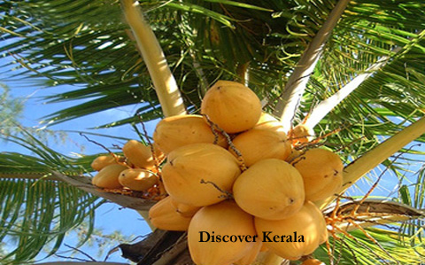 South India Tour Packages - Discover Kerala Package