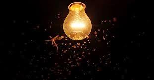 Só Lâmpada Acesa Atrai Besouros