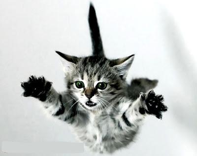 gatos e quedas altas