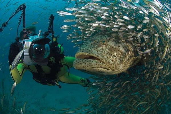Foto-foto Luar Biasa Yang Menakjubkan [ www.BlogApaAja.com ]