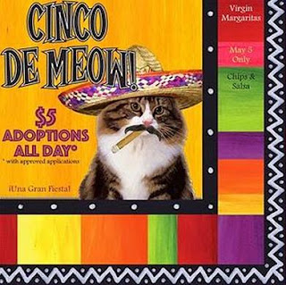 "Adoption promotion that reads, ""Cinco de Meow! $5 adoptions all day. Una Gran Fiesta"" Shows a cat wearing a sombrero and a moustache while smoking a cigarello"