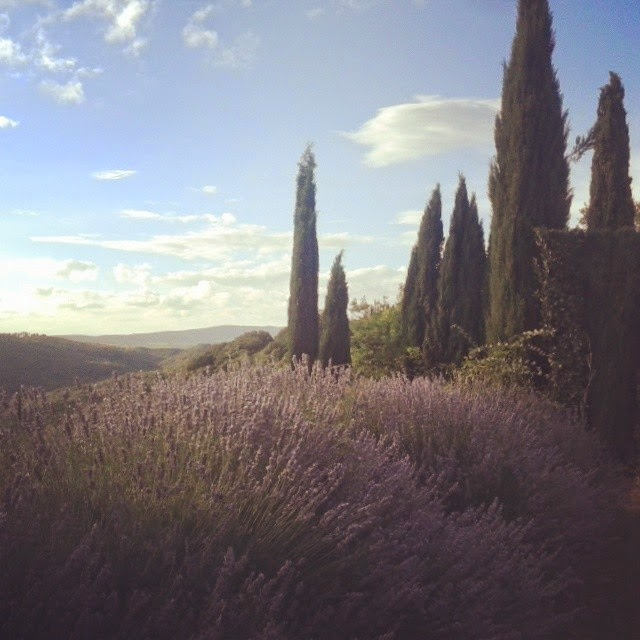 lavender and cypress trees at Castello di Argiano