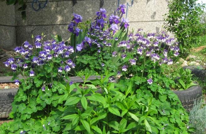 Моята градинка - 05.05.2015