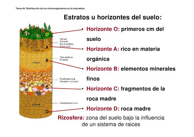 Geologia semana 4 for Como se forma y desarrolla el suelo