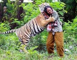 Harimau baham manusia