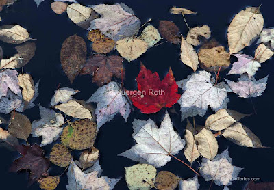 http://juergen-roth.artistwebsites.com/art/leaf