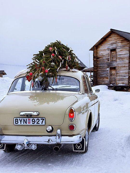 Christmas-winter-tree-snow