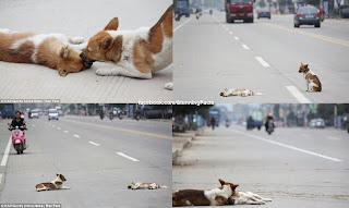 TOUCHING STORY OF TWO DOGS IN CHINA