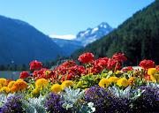 PZ C: primavera fiori (primavera)