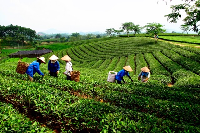 Thai Nguyen Vietnam  city images : Thai Nguyen, a tea capital of Vietnam