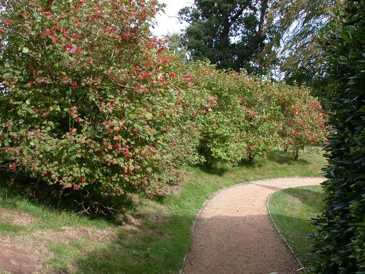Nell 39 educazione un tesoro leggere per condividere curiose for Progettista giardini