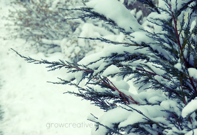 snow covered branches: grow creative