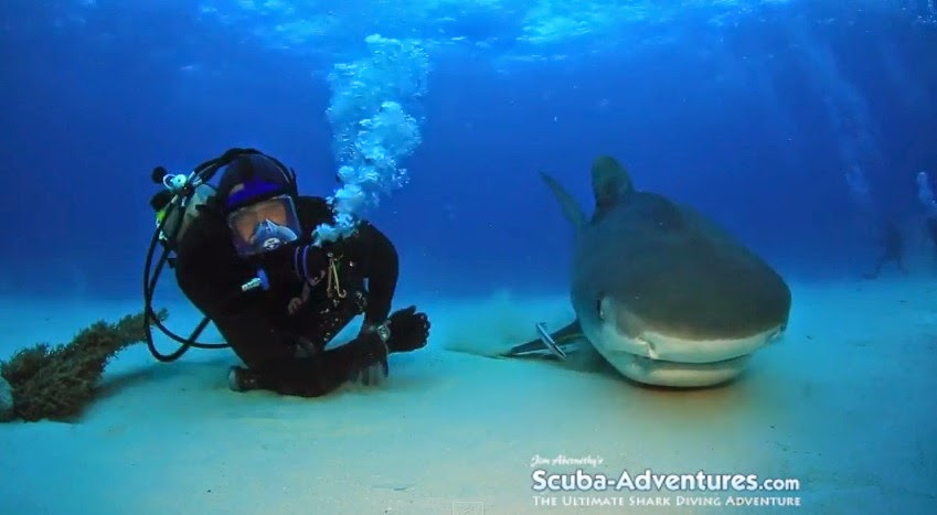 Jim Abernethy swims with tiger shark