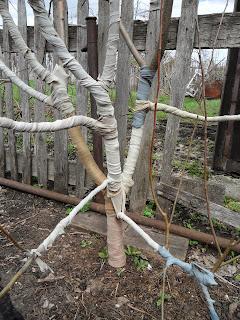 Яблоня готова к зиме