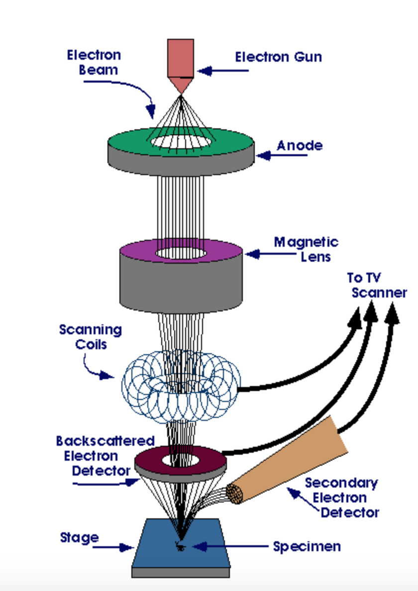 scanning electron microscope  group   this below shows the diagram of how the sem works