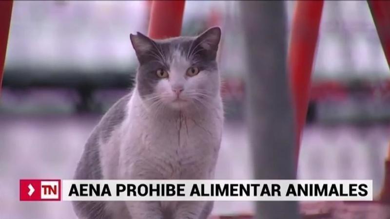 AENA expedientará a los trabajadores que alimenten a animales