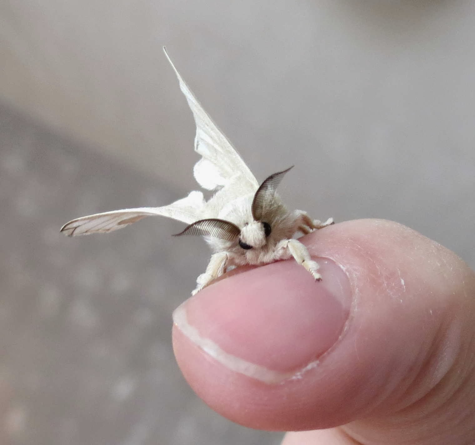 Funny animals of the week - 27 December 2013 (40 pics ...