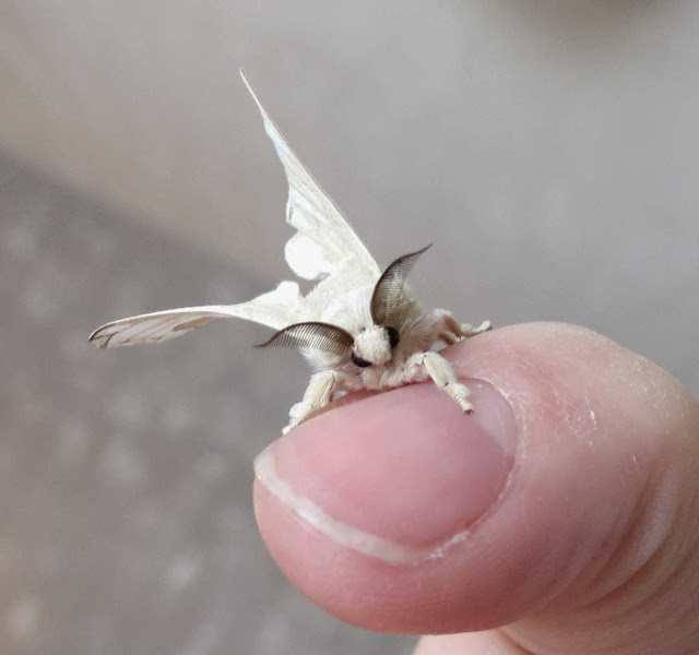 Funny animals of the week - 27 December 2013 (40 pics), moth lands on finger
